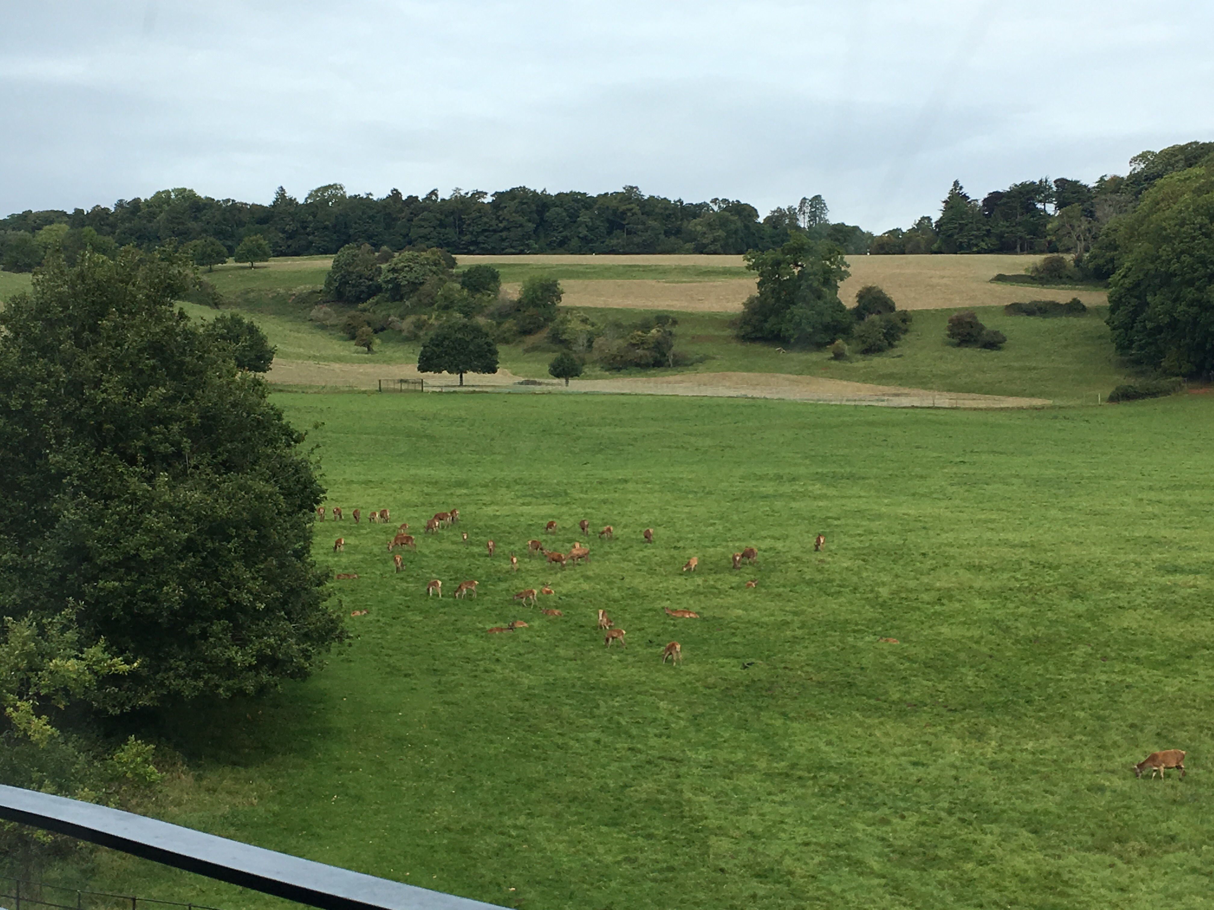 The view of Ashton Court Estate & Deer Park from our new building! September, 2017